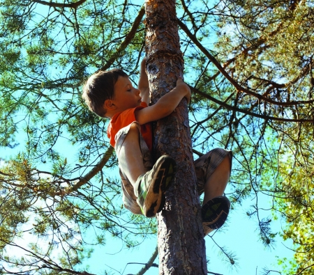 little cute boy climbing on tree
